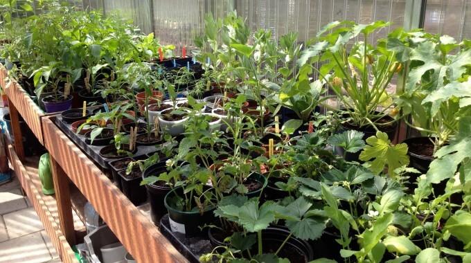 Kas Met Plantjes Workshop Zaaien En Verspenen