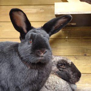 jansen-en-mie-van-de-zimmerhoeve-konijn