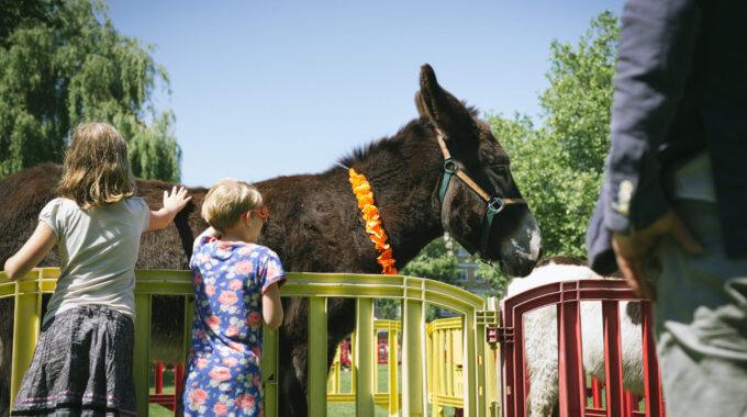 201606 Lewensztain DonkeyDay2016 Lr 0276