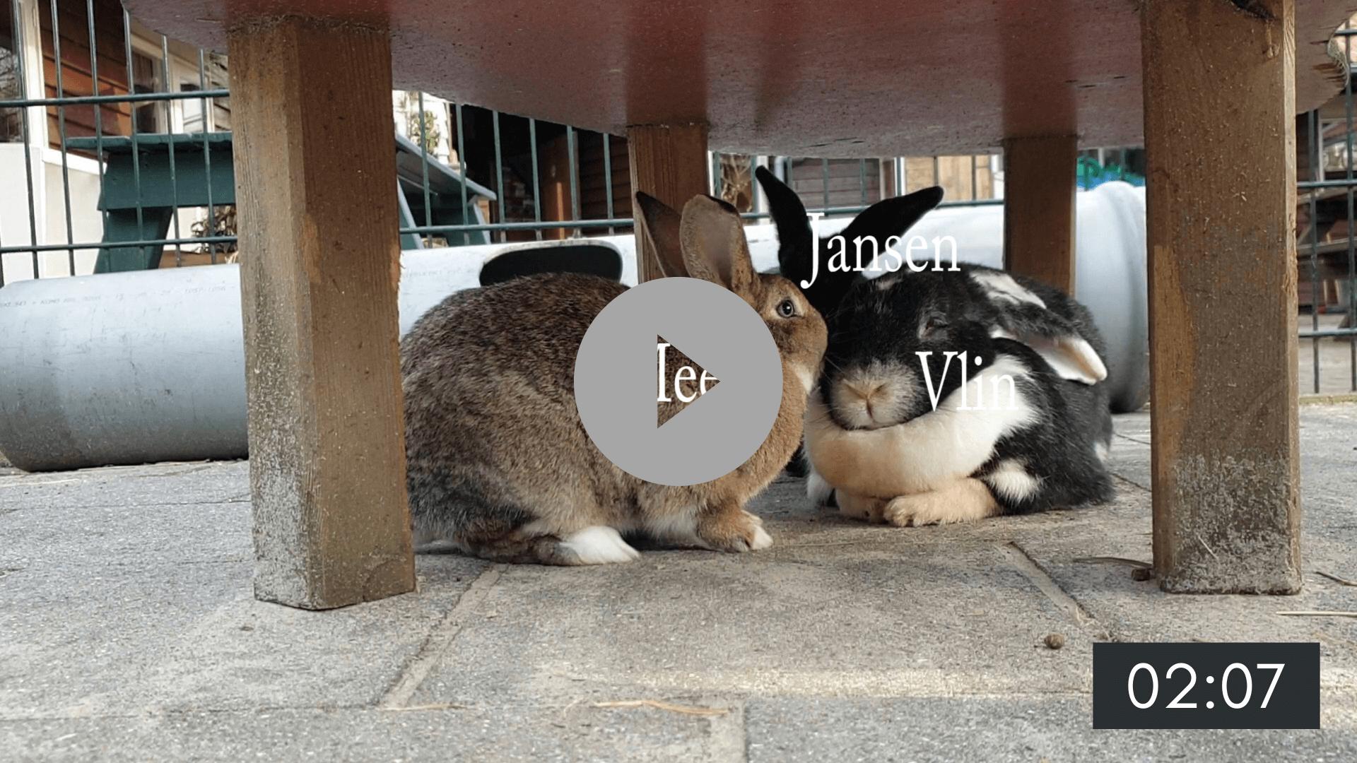 Een dag met de konijnen in de tuin